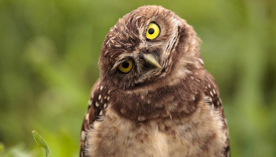 code-review-owl